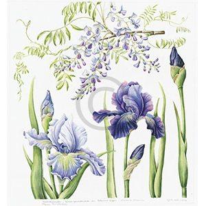 Iris & blauwe regen